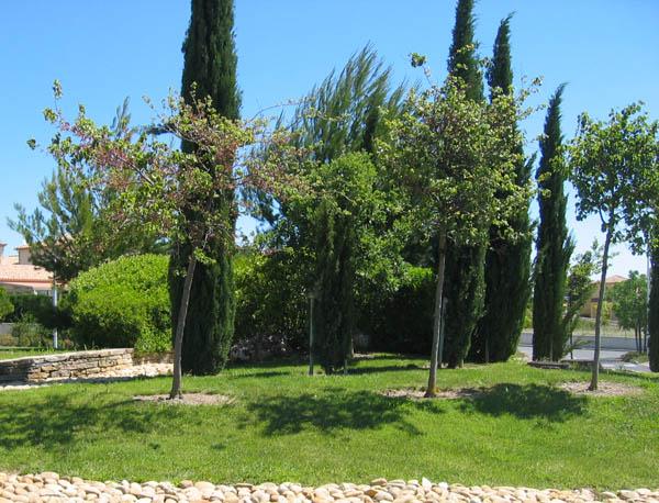 Jardin service entretien d 39 espaces verts et mise en for Entretien jardin 86
